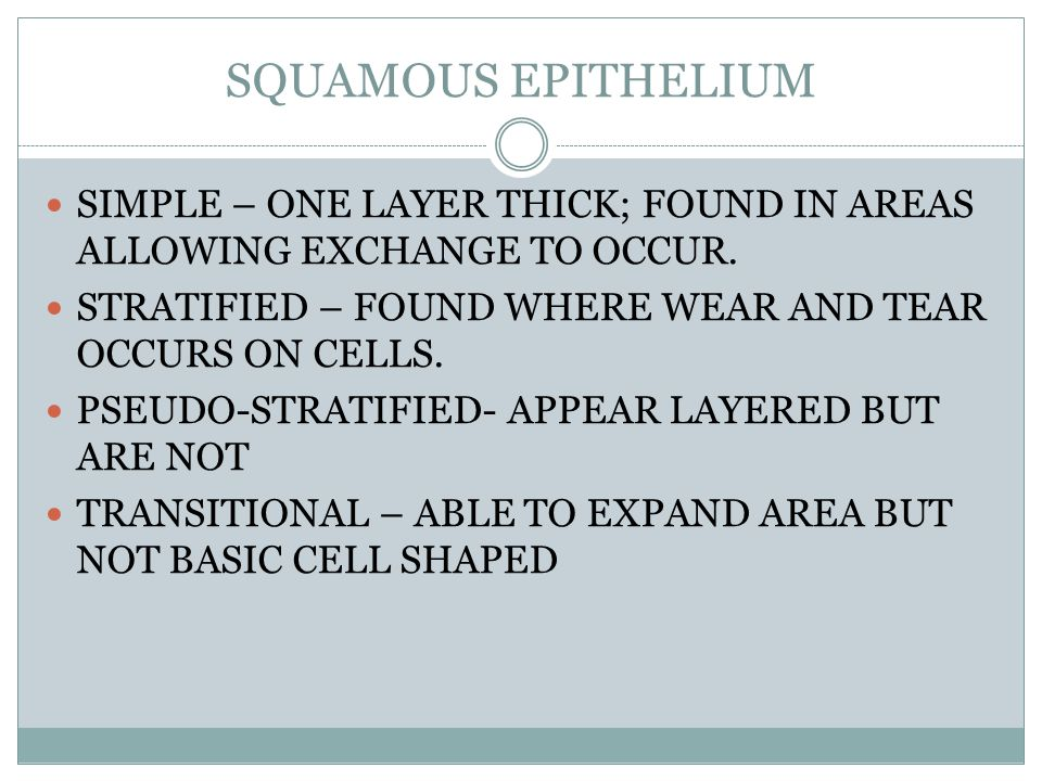 SQUAMOUS EPITHELIUM SIMPLE – ONE LAYER THICK; FOUND IN AREAS ALLOWING EXCHANGE TO OCCUR.