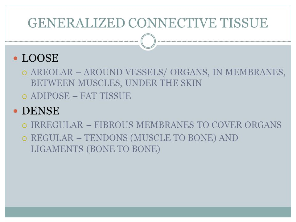 GENERALIZED CONNECTIVE TISSUE LOOSE  AREOLAR – AROUND VESSELS/ ORGANS, IN MEMBRANES, BETWEEN MUSCLES, UNDER THE SKIN  ADIPOSE – FAT TISSUE DENSE  IRREGULAR – FIBROUS MEMBRANES TO COVER ORGANS  REGULAR – TENDONS (MUSCLE TO BONE) AND LIGAMENTS (BONE TO BONE)