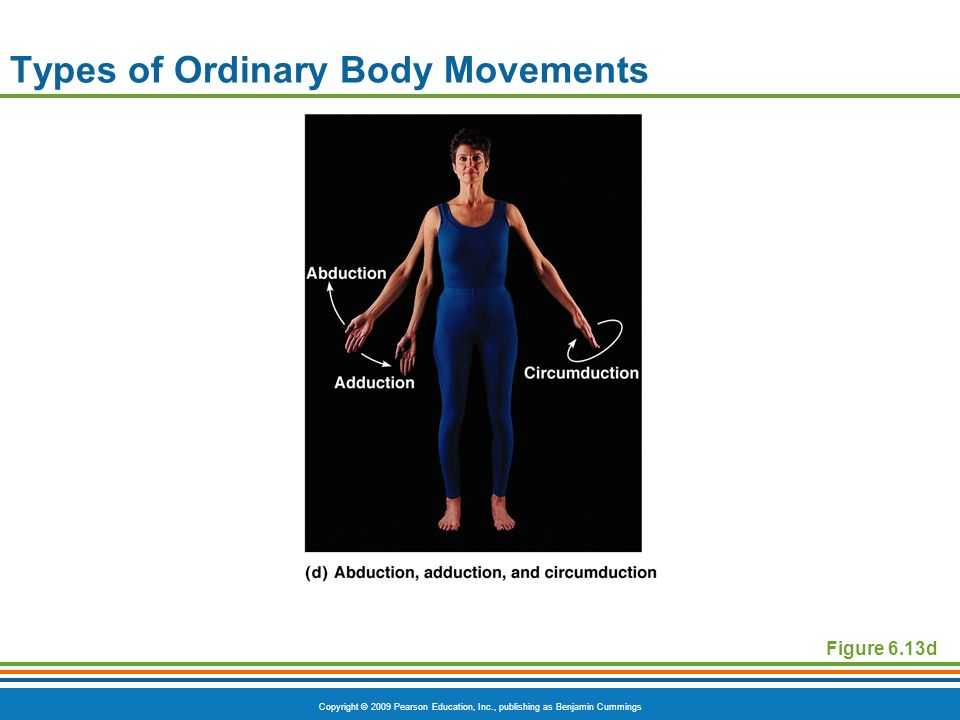 Copyright © 2009 Pearson Education, Inc., publishing as Benjamin Cummings Types of Ordinary Body Movements Figure 6.13d