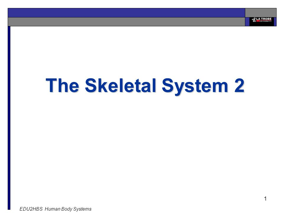 EDU2HBS Human Body Systems 1 The Skeletal System 2