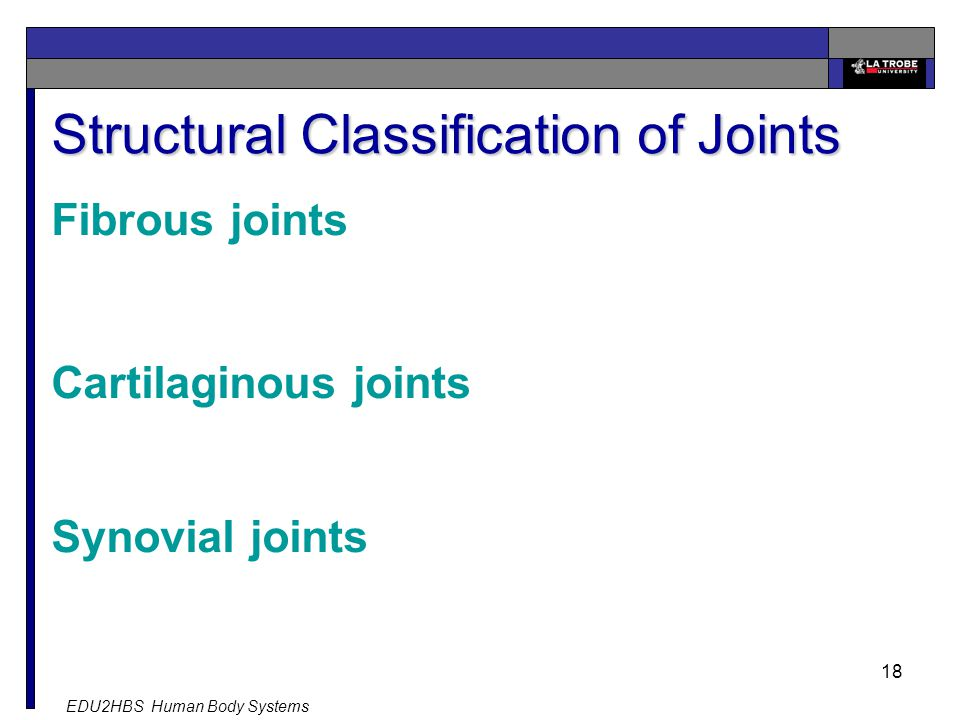 EDU2HBS Human Body Systems 18 Structural Classification of Joints Fibrous joints Cartilaginous joints Synovial joints