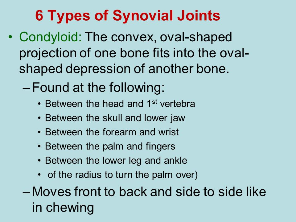 6 Types of Synovial Joints Condyloid: The convex, oval-shaped projection of one bone fits into the oval- shaped depression of another bone. –Found at
