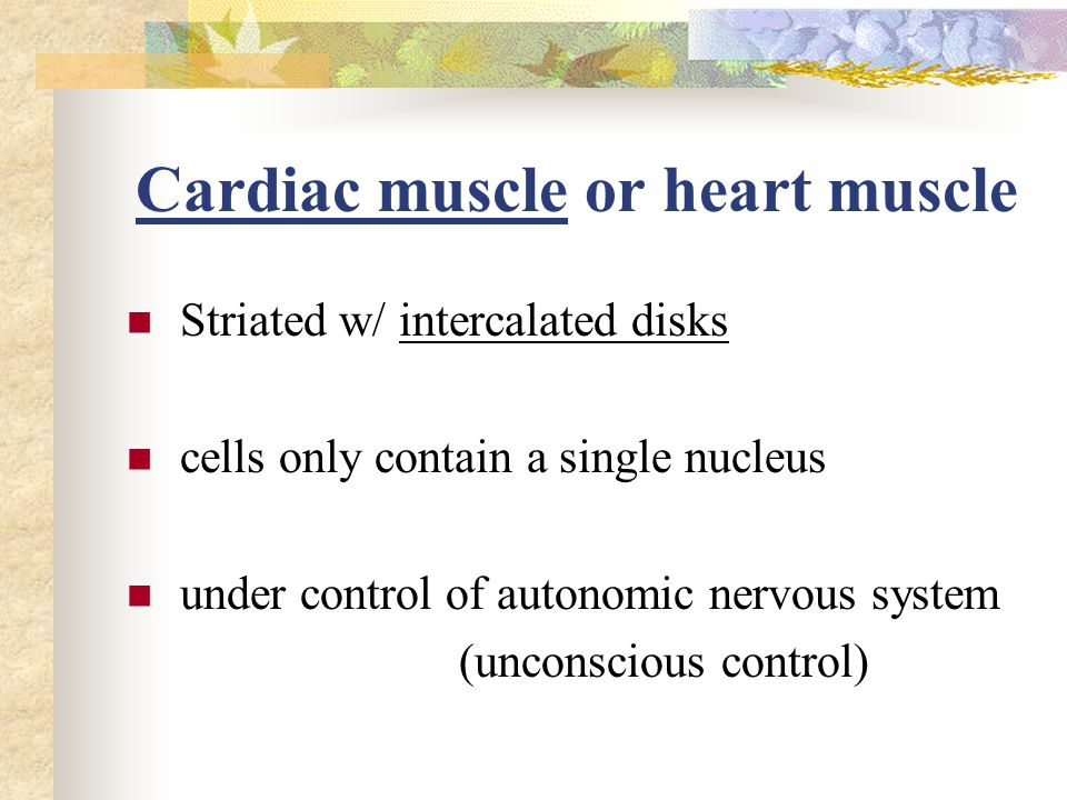 Cardiac muscle or heart muscle Striated w/ intercalated disks cells only contain a single nucleus under control of autonomic nervous system (unconscious control)