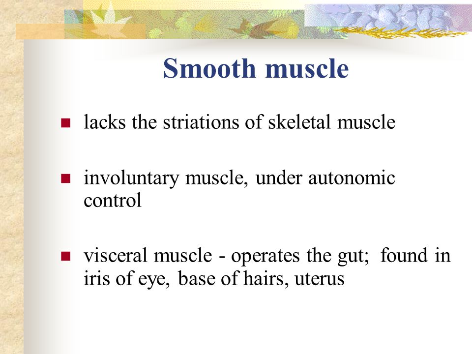 Smooth muscle lacks the striations of skeletal muscle involuntary muscle, under autonomic control visceral muscle - operates the gut; found in iris of eye, base of hairs, uterus