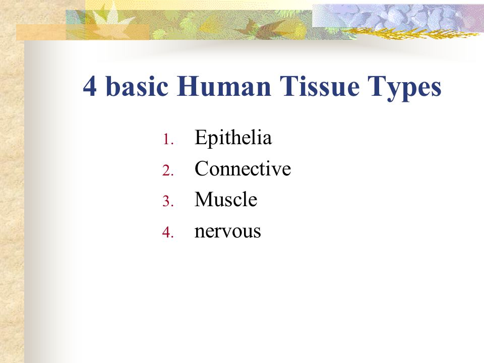 4 basic Human Tissue Types 1. Epithelia 2. Connective 3. Muscle 4. nervous