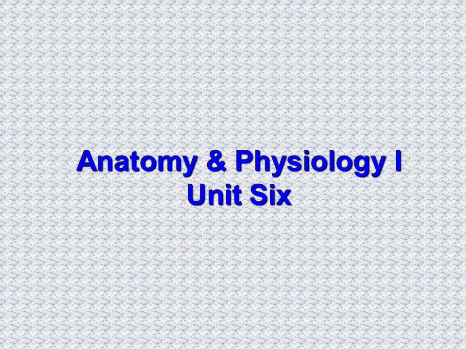 Anatomy & Physiology I Unit Six