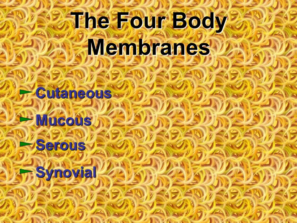 The Four Body Membranes Cutaneous Mucous Serous Synovial