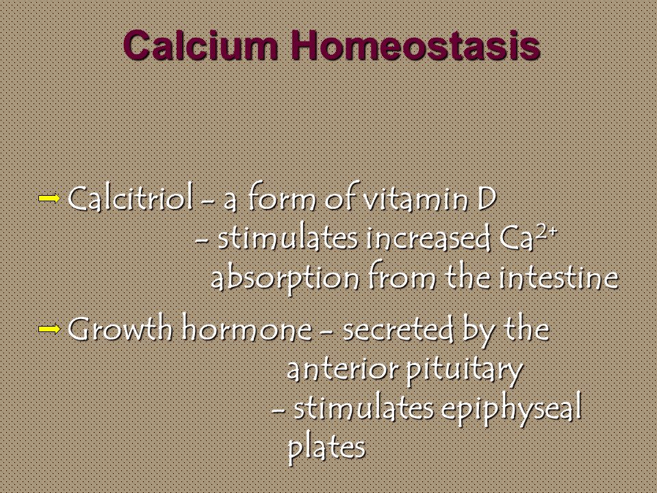 Calcium Homeostasis Calcitriol - a form of vitamin D - stimulates increased Ca 2+ absorption from the intestine Growth hormone - secreted by the anterior pituitary - stimulates epiphyseal plates