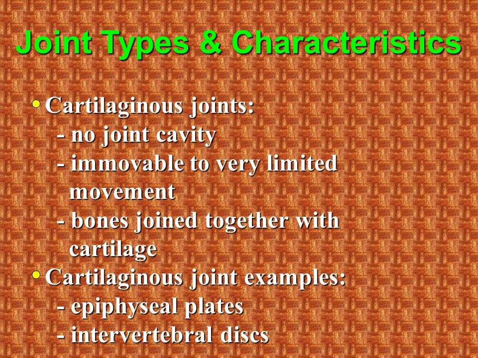 Joint Types & Characteristics Cartilaginous joints: - no joint cavity - immovable to very limited movement - bones joined together with cartilage Cartilaginous joint examples: - epiphyseal plates - intervertebral discs