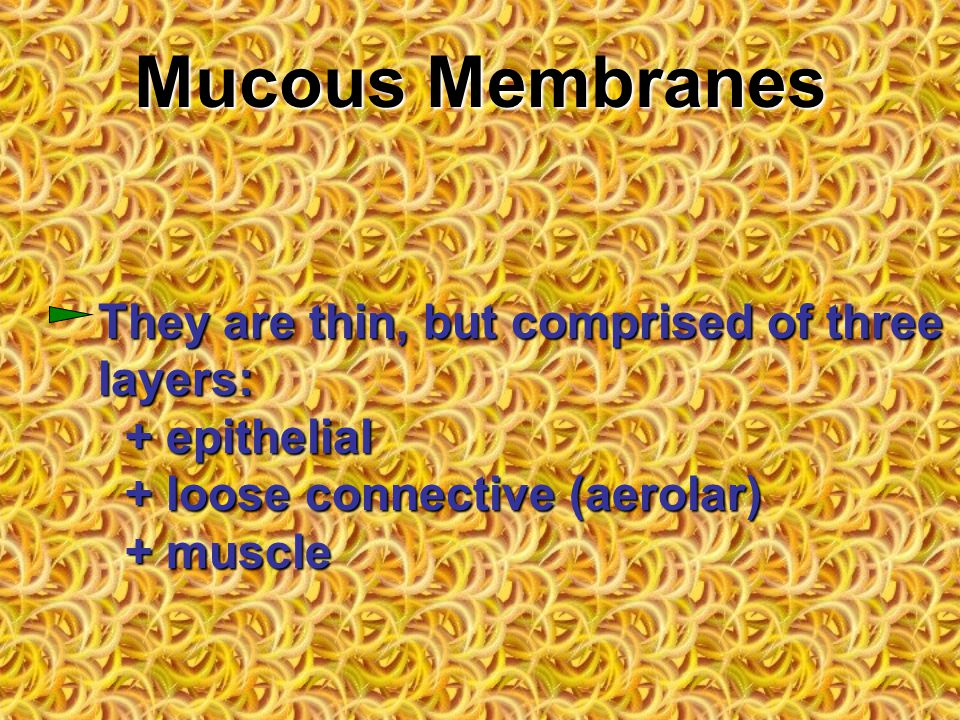 Mucous Membranes They are thin, but comprised of three layers: + epithelial + loose connective (aerolar) + muscle