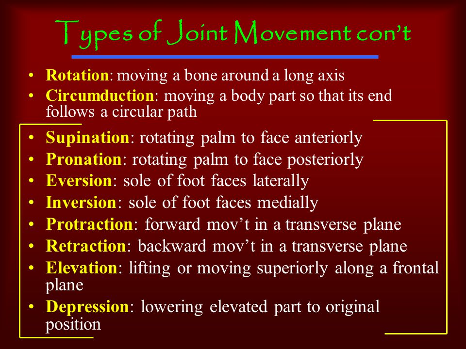 Types of Joint Movement con't Rotation: moving a bone around a long axis Circumduction: moving a body part so that its end follows a circular path Supination: rotating palm to face anteriorly Pronation: rotating palm to face posteriorly Eversion: sole of foot faces laterally Inversion: sole of foot faces medially Protraction: forward mov't in a transverse plane Retraction: backward mov't in a transverse plane Elevation: lifting or moving superiorly along a frontal plane Depression: lowering elevated part to original position