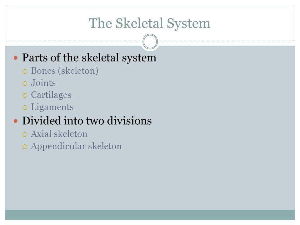 The Skeletal System Parts of the skeletal system  Bones (skeleton)  Joints  Cartilages  Ligaments Divided into two divisions  Axial skeleton  Appendicular skeleton