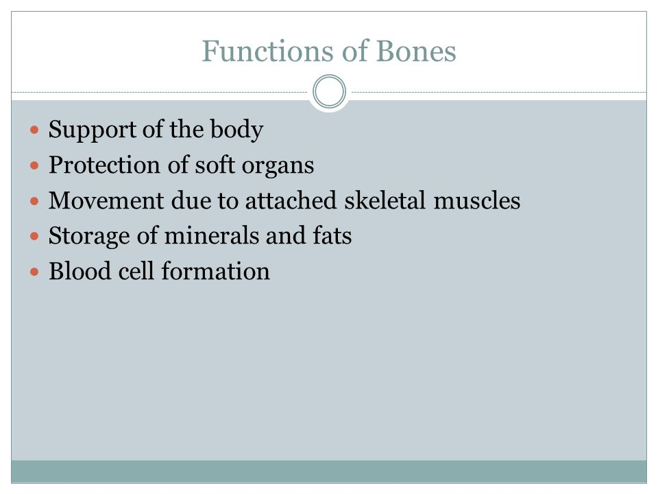 Functions of Bones Support of the body Protection of soft organs Movement due to attached skeletal muscles Storage of minerals and fats Blood cell formation