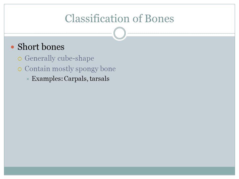 Classification of Bones Short bones  Generally cube-shape  Contain mostly spongy bone  Examples: Carpals, tarsals