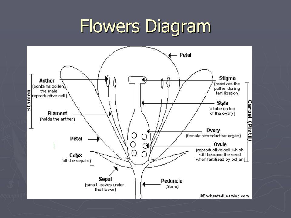 Flowers Diagram