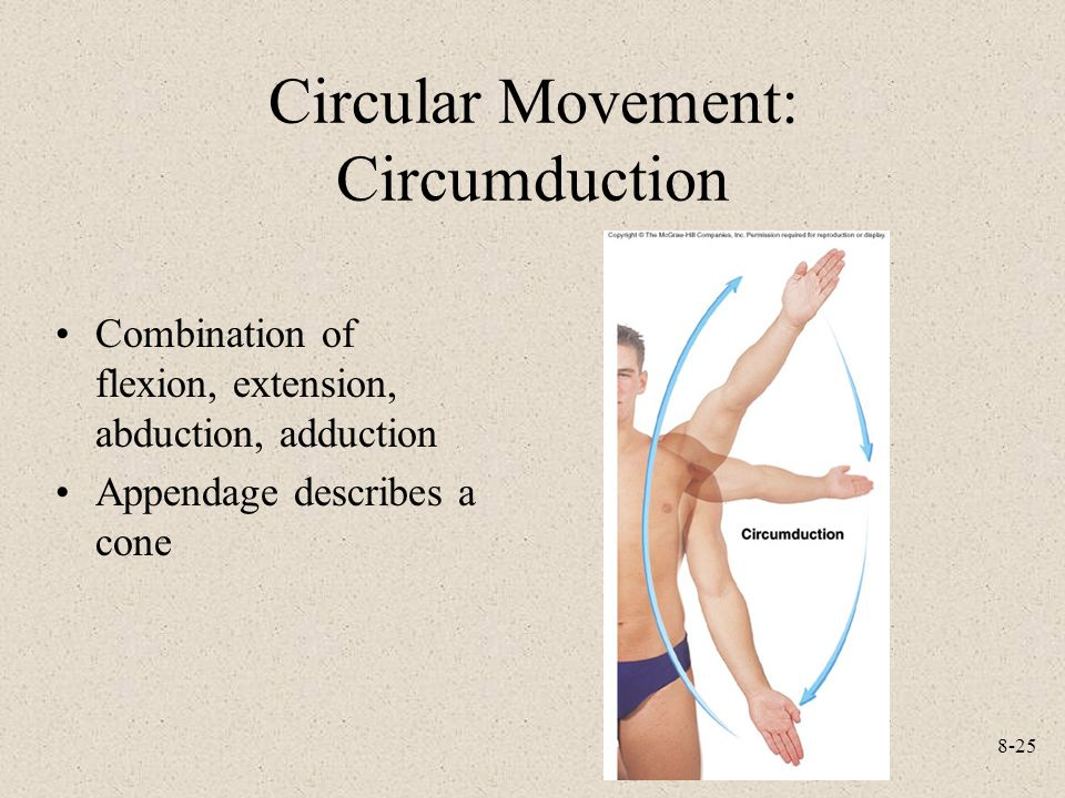8-25 Circular Movement: Circumduction Combination of flexion, extension, abduction, adduction Appendage describes a cone
