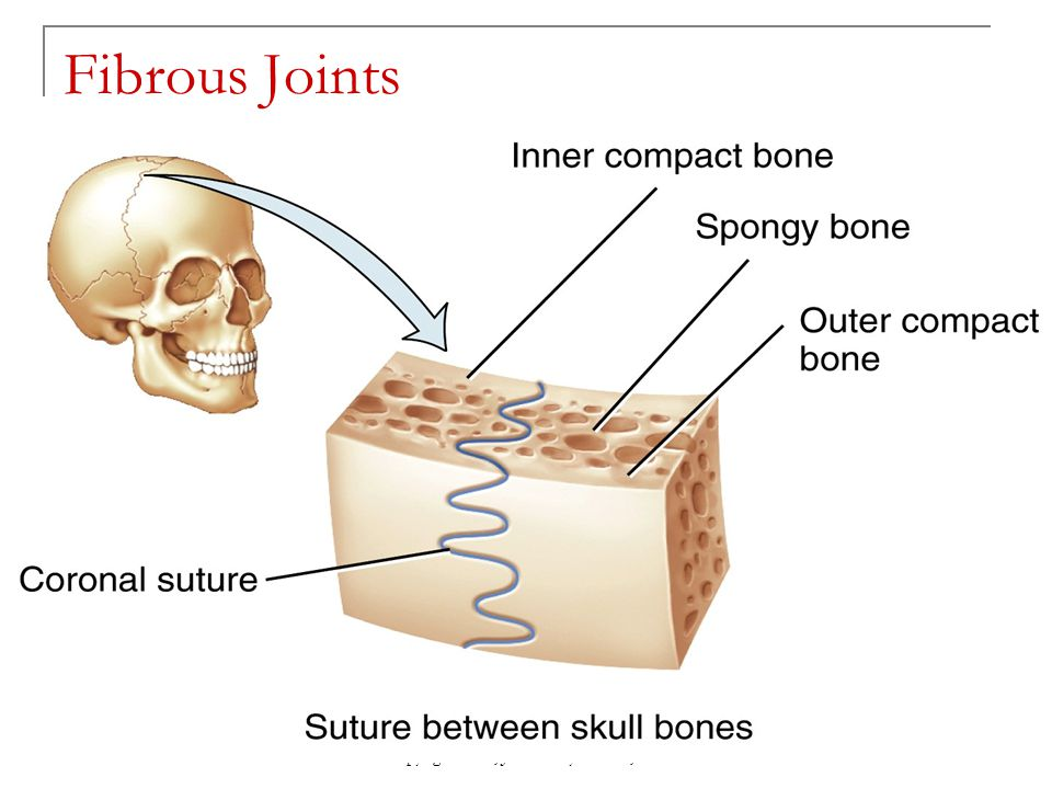 Copyright 2010, John Wiley & Sons, Inc. Fibrous Joints