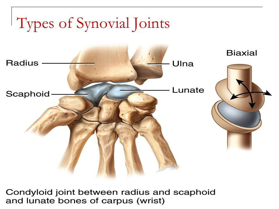 Copyright 2010, John Wiley & Sons, Inc. Types of Synovial Joints