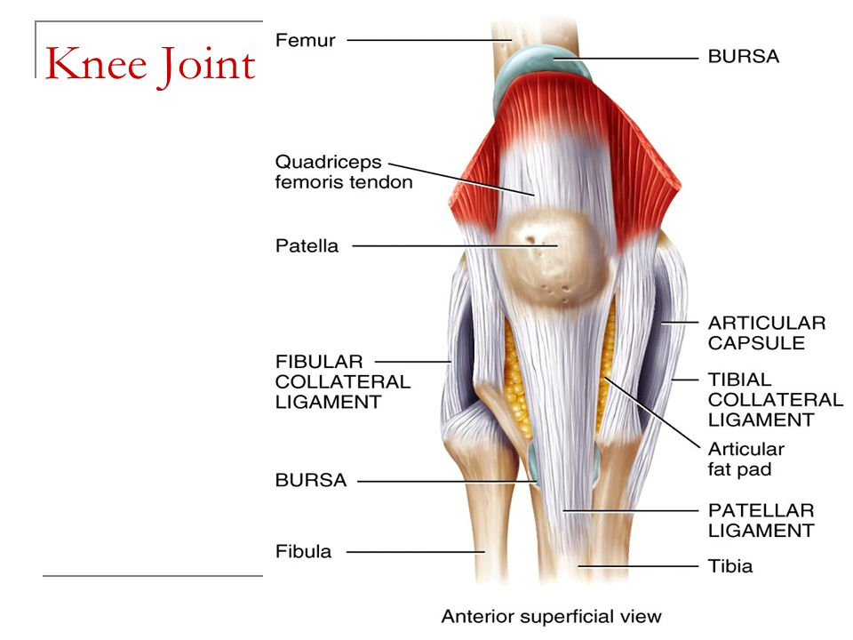 Copyright 2010, John Wiley & Sons, Inc. Knee Joint