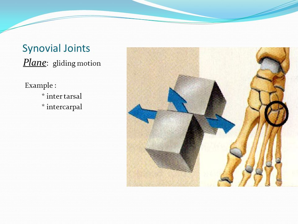 Synovial Joints Plane : gliding motion Example : * inter tarsal * intercarpal