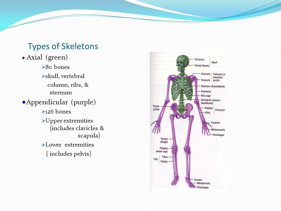 Bone Types Lippert p.