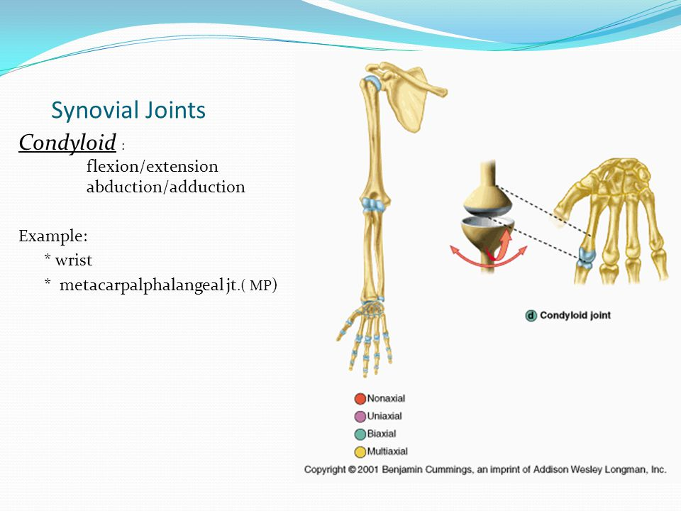 Synovial Joints Condyloid : flexion/extension abduction/adduction Example: * wrist * metacarpalphalangeal jt.( MP )