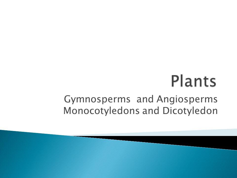 Gymnosperms and Angiosperms Monocotyledons and Dicotyledon