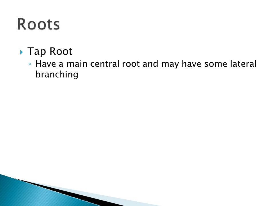  Tap Root ◦ Have a main central root and may have some lateral branching