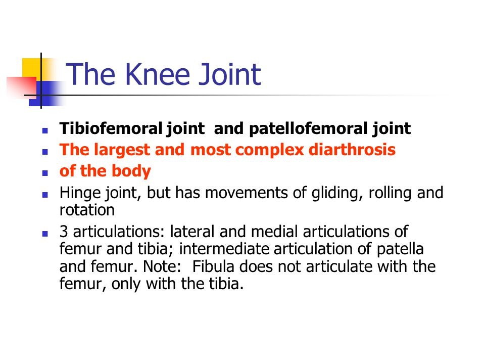 The Knee Joint Tibiofemoral joint and patellofemoral joint The largest and most complex diarthrosis of the body Hinge joint, but has movements of glid