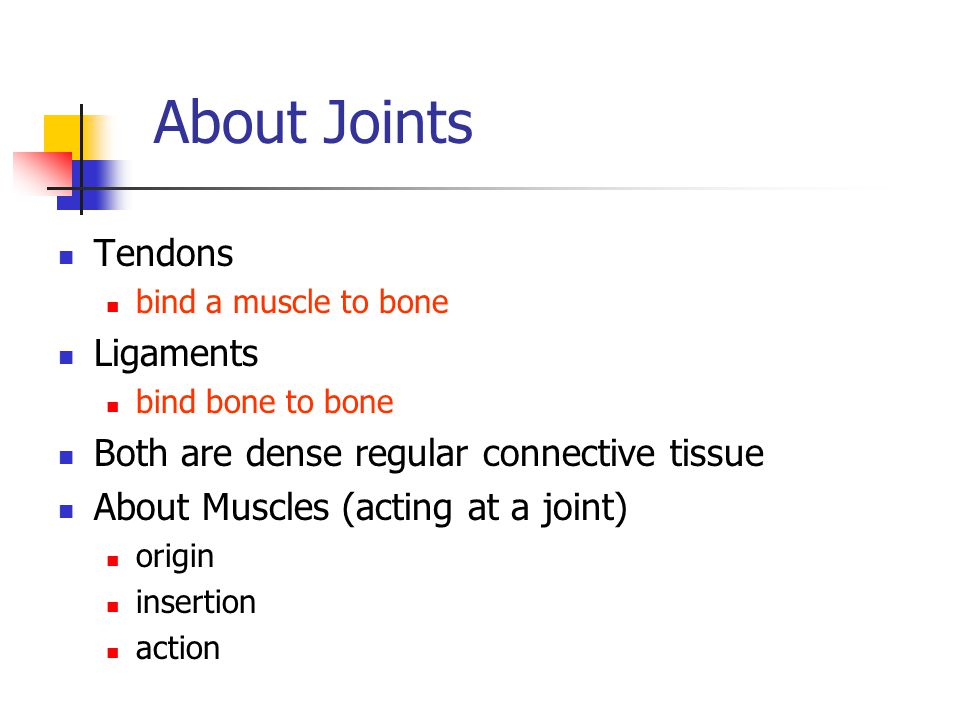 About Joints Tendons bind a muscle to bone Ligaments bind bone to bone Both are dense regular connective tissue About Muscles (acting at a joint) orig