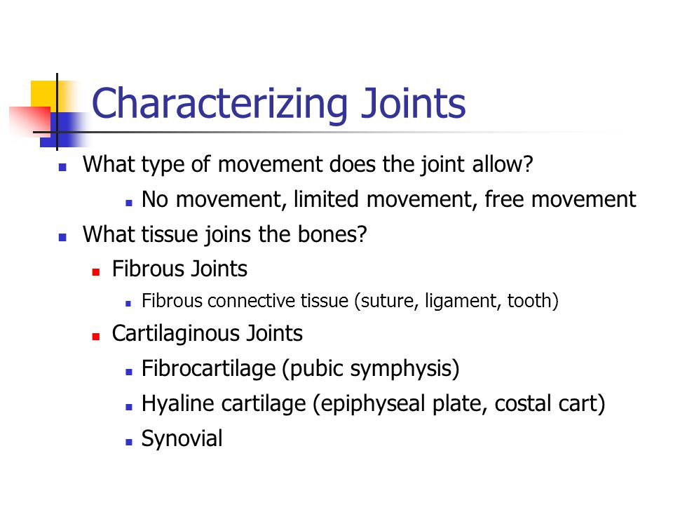 Characterizing Joints What type of movement does the joint allow? No movement, limited movement, free movement What tissue joins the bones? Fibrous Jo