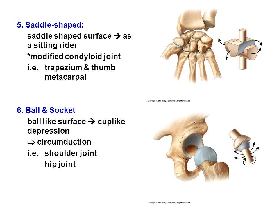 5. Saddle-shaped: saddle shaped surface  as a sitting rider *modified condyloid joint i.e.trapezium & thumb metacarpal 6. Ball & Socket ball like sur