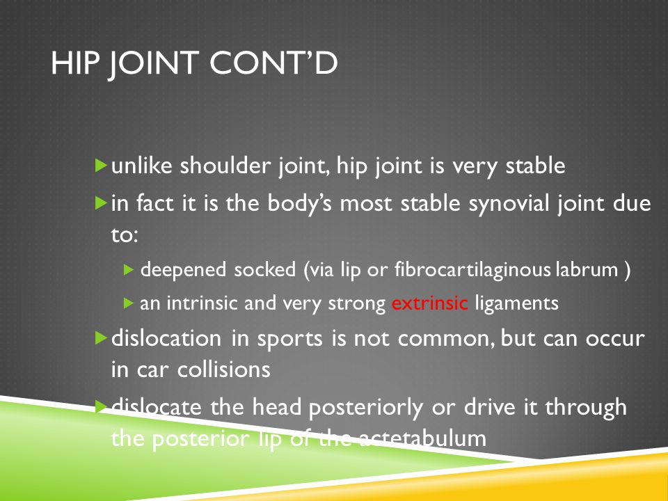 HIP JOINT CONT'D  unlike shoulder joint, hip joint is very stable  in fact it is the body's most stable synovial joint due to:  deepened socked (via lip or fibrocartilaginous labrum )  an intrinsic and very strong extrinsic ligaments  dislocation in sports is not common, but can occur in car collisions  dislocate the head posteriorly or drive it through the posterior lip of the actetabulum