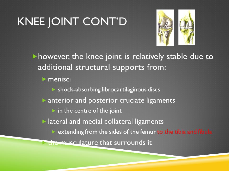 KNEE JOINT CONT'D  however, the knee joint is relatively stable due to additional structural supports from:  menisci  shock-absorbing fibrocartilaginous discs  anterior and posterior cruciate ligaments  in the centre of the joint  lateral and medial collateral ligaments  extending from the sides of the femur to the tibia and fibula  the musculature that surrounds it