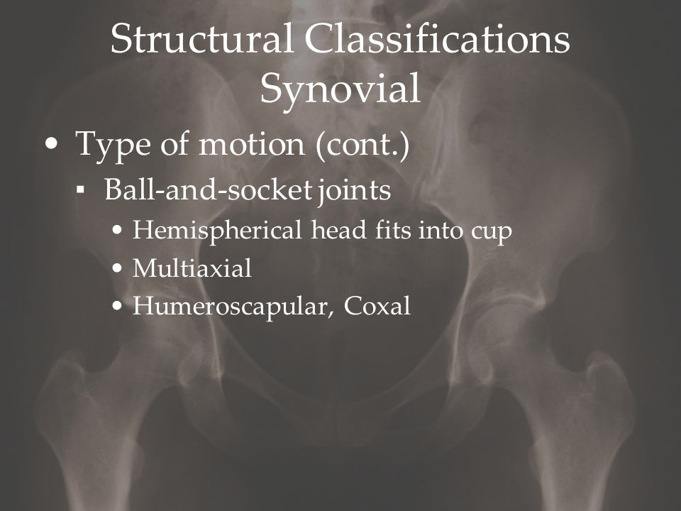 Structural Classifications Synovial Type of motion (cont.) ▪ Ball-and-socket joints Hemispherical head fits into cup Multiaxial Humeroscapular, Coxal