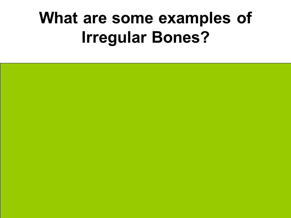 What are some examples of Irregular Bones Vertebrae Hip Pelvic