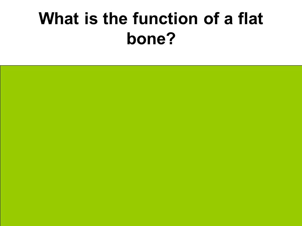 What is the function of a flat bone Protection Like a plate of armor