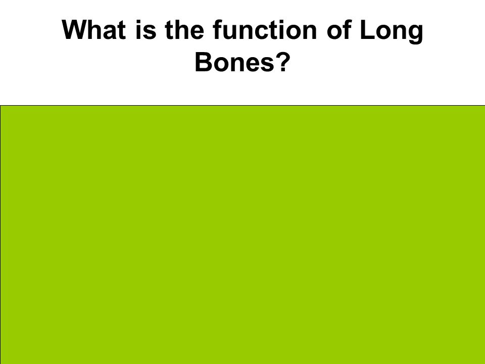What is the function of Long Bones Structure & Support Weight Bearing
