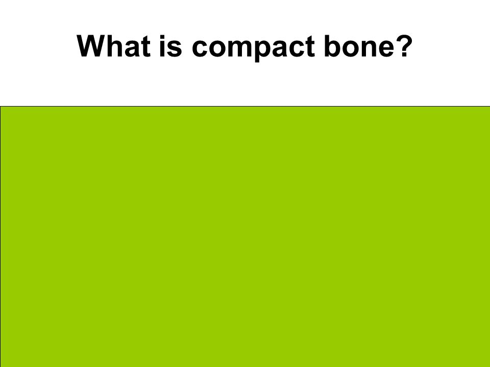 What is compact bone The outermost layer of bone Dense + Solid