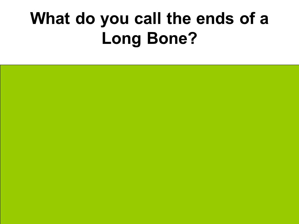 What do you call the ends of a Long Bone Epiphyses