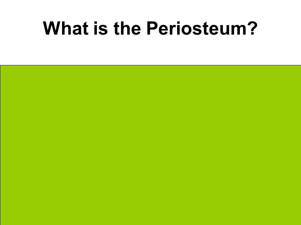 What is the Periosteum Outermost fibrous membrane Surrounds compact bone