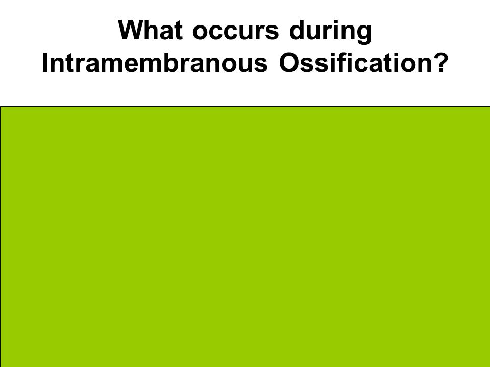 What occurs during Intramembranous Ossification.