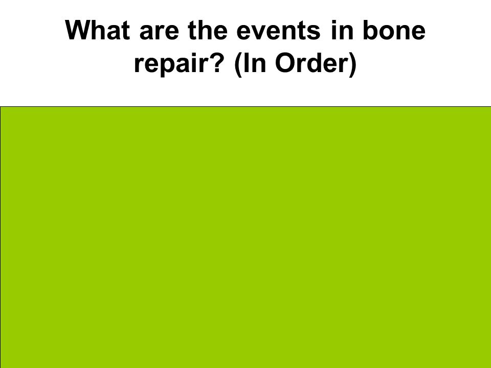 What are the events in bone repair.