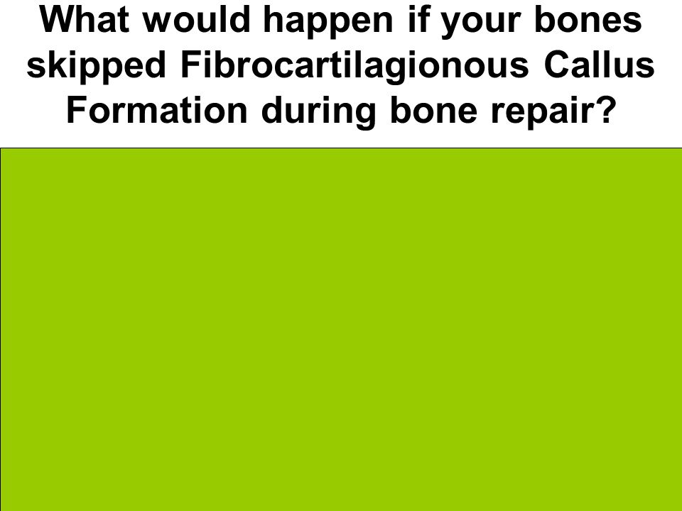 What would happen if your bones skipped Fibrocartilagionous Callus Formation during bone repair.