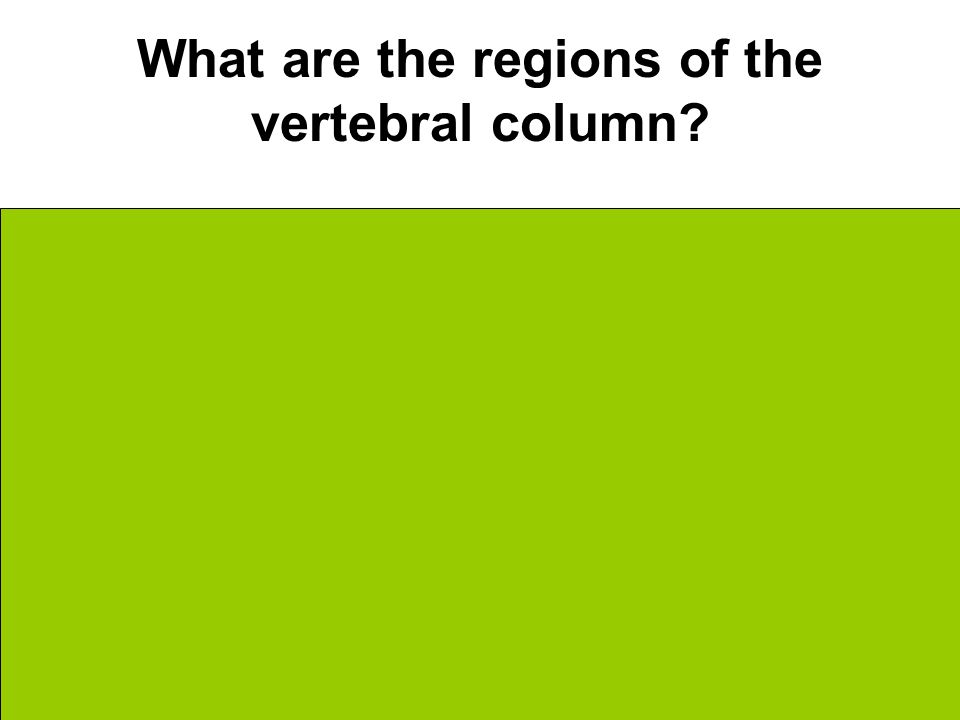 What are the regions of the vertebral column [Superior] Cervical Thoracic Lumbar Sacral [Inferior]