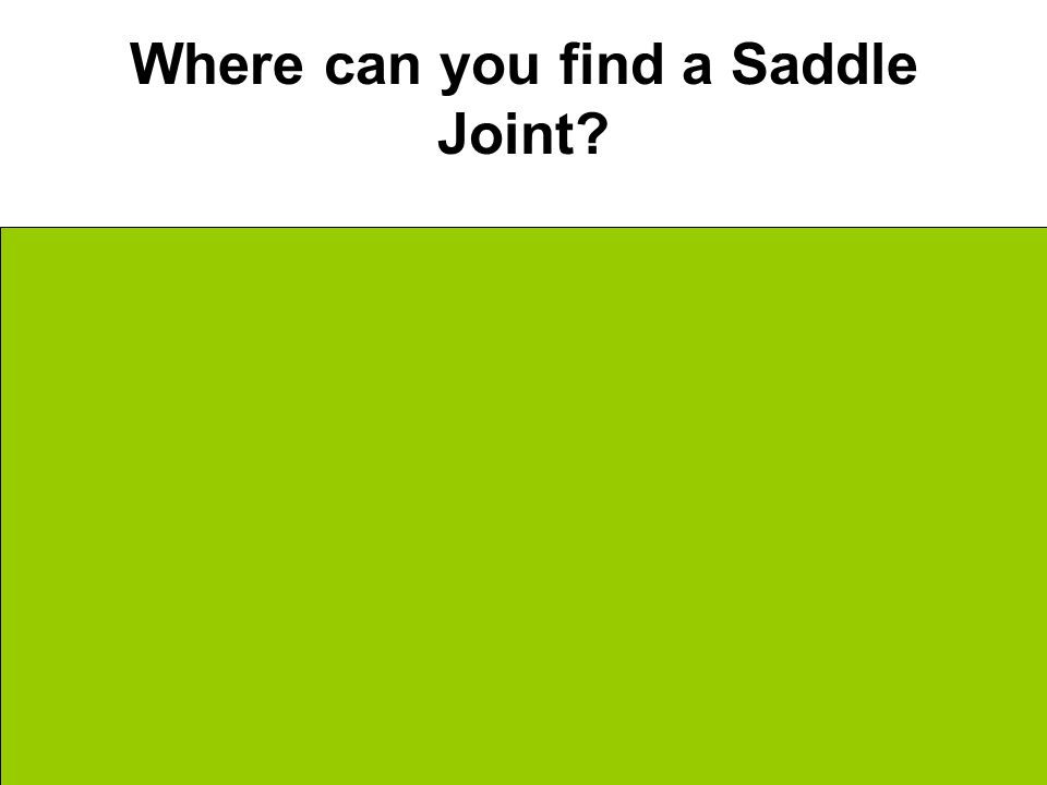 Where can you find a Saddle Joint Thumbs Metacarpals