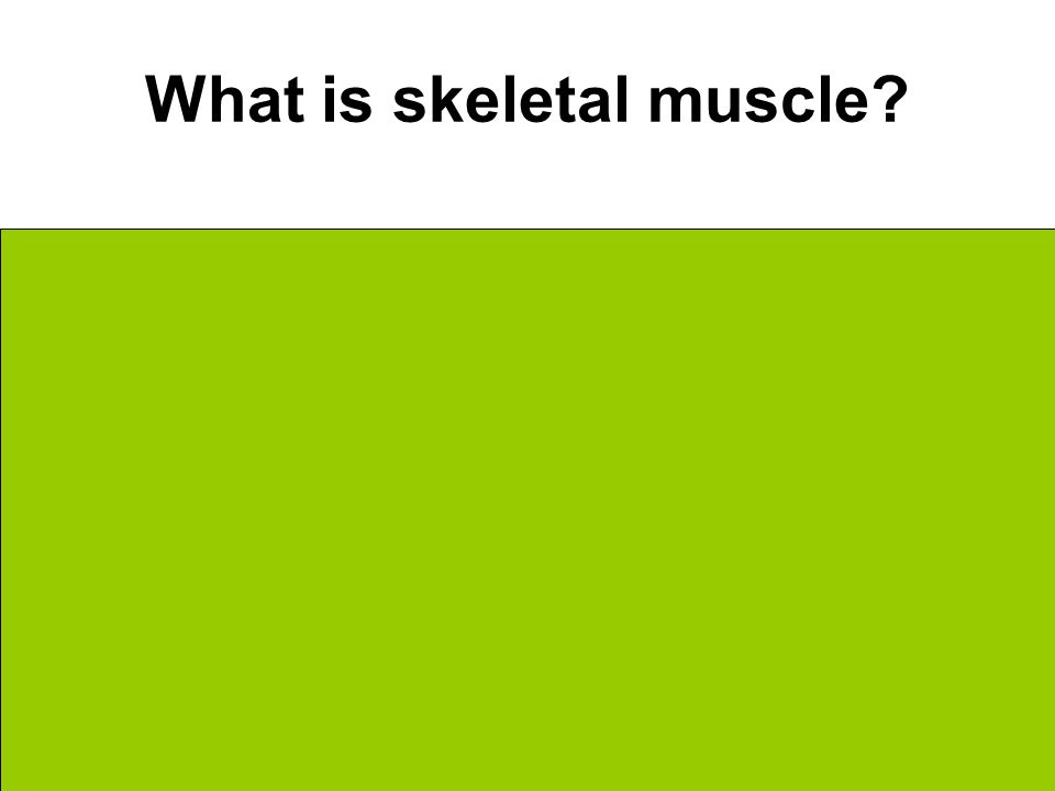 What is skeletal muscle On top of bones Voluntary movement Overall Body mobility