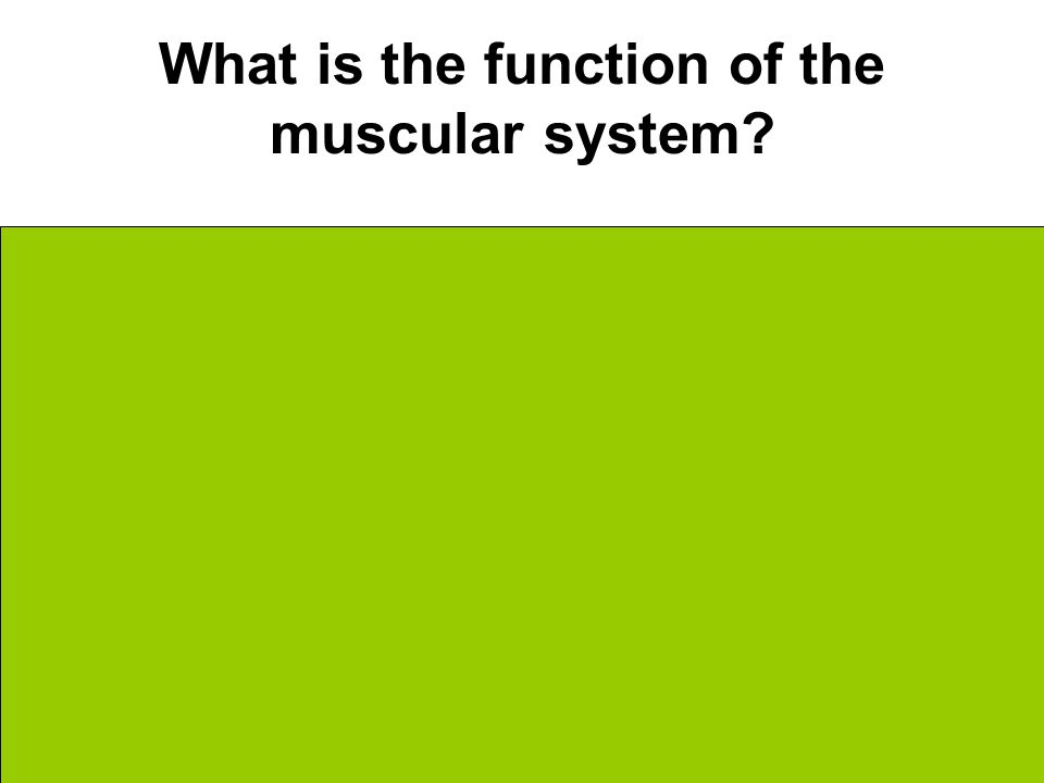 What is the function of the muscular system.