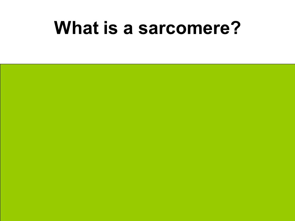What is a sarcomere The contractile unit/portion within the myofibril