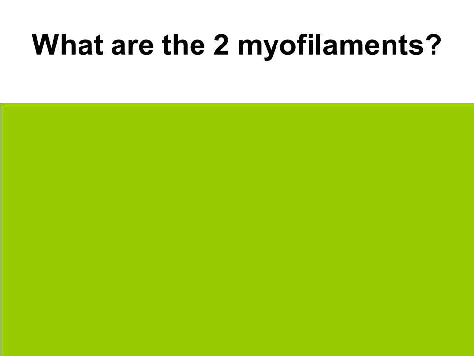 What are the 2 myofilaments Actin Myosin